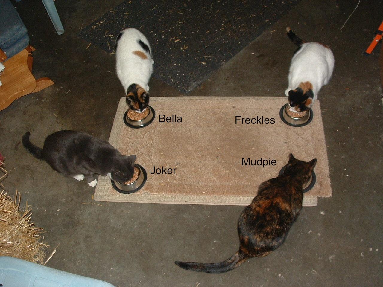 Feral Cat Faq S The Paws Clinic